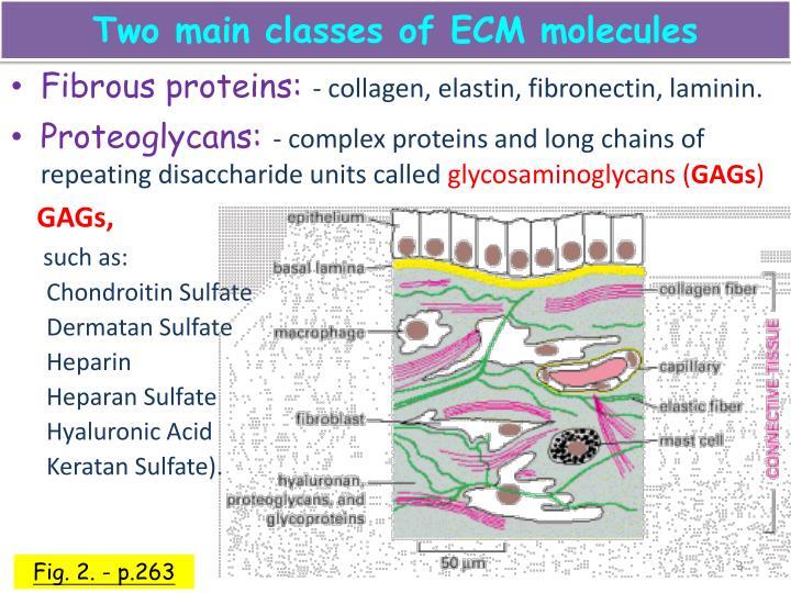 PPT - 細胞外基質 ( Extracellular matrix, ECM ) & 細胞死亡 PowerPoint Presentation - ID:3546741