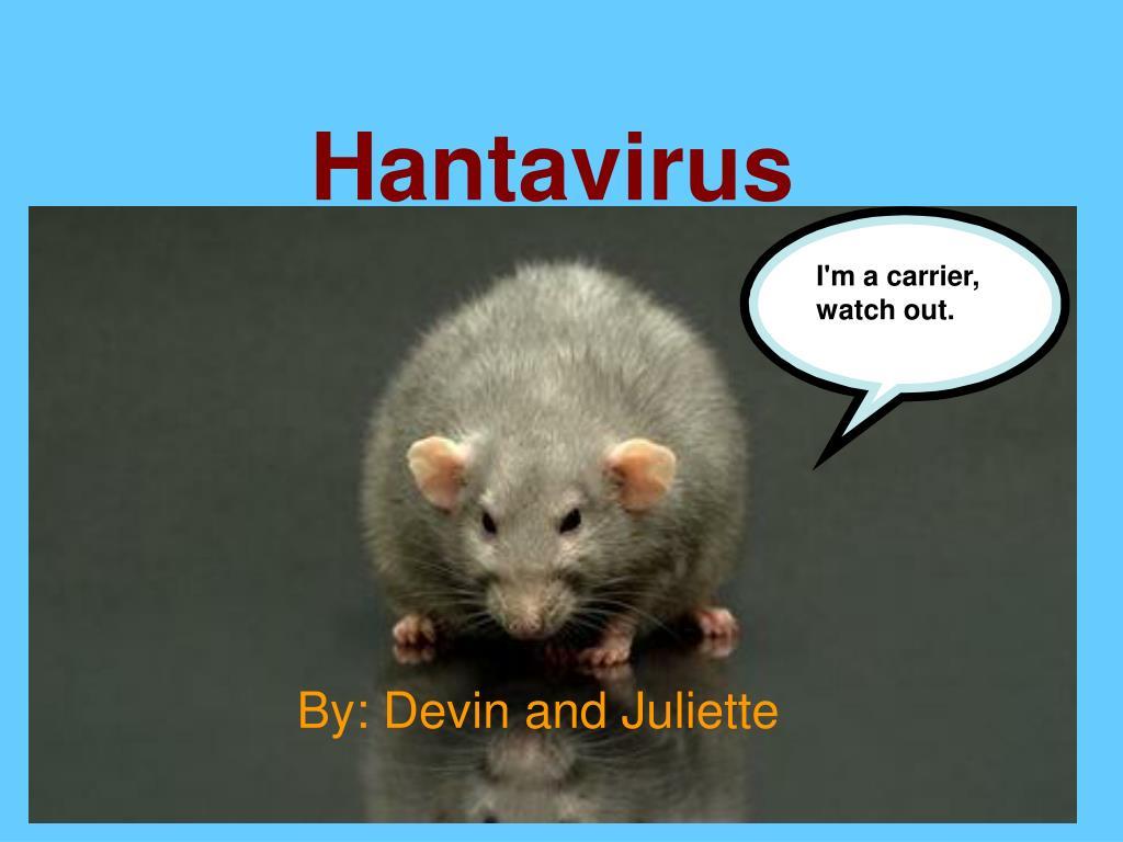 PPT - Hantavirus PowerPoint Presentation, free download - ID:3553979