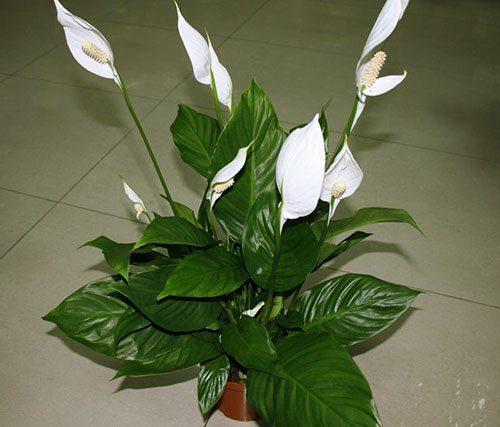 Примета разбился керамический горшок с цветком. Приметы о цветах: какие букеты нельзя дарить