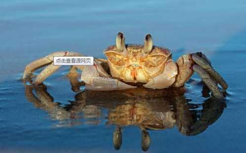 螃蟹怎么保存 活螃蟹應該怎么保存 - 鑫原點
