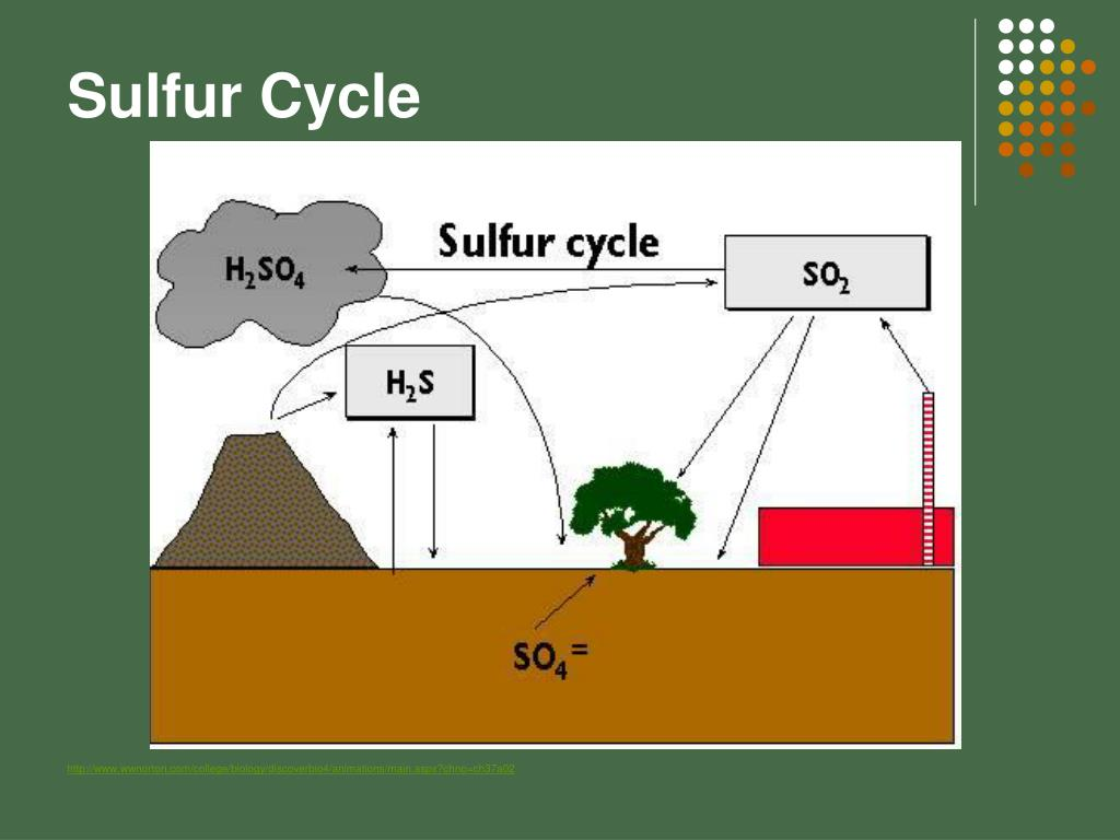hight resolution of sulfur cycle http www wwnorton com college biology discoverbio4 animations main aspx chno ch37a02