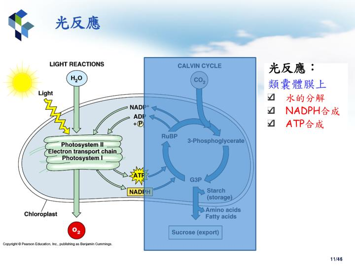 PPT - 學生 : 于振銓 授課教授 : 張憲彰 2 011/11/08 PowerPoint Presentation - ID:3713310