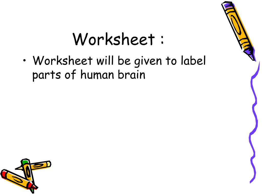 35 Label Parts Of The Brain Worksheet