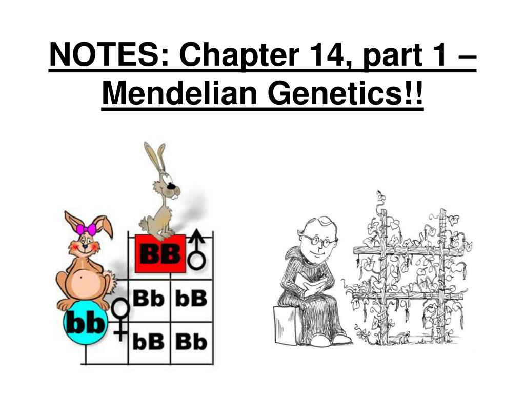 PPT - NOTES: Chapter 14, part 1