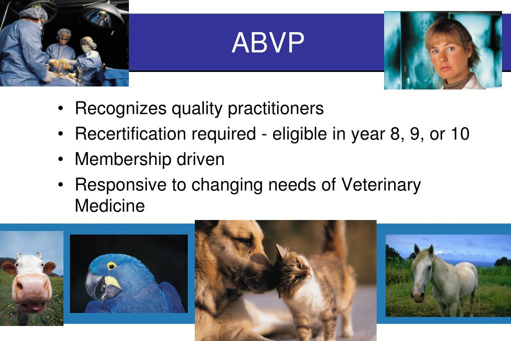 PPT - ABVP Board Certification PowerPoint Presentation. free download - ID:3963352