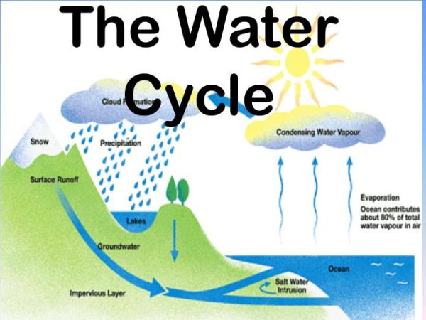 PPT The Water Cycle PowerPoint Presentation ID4032740