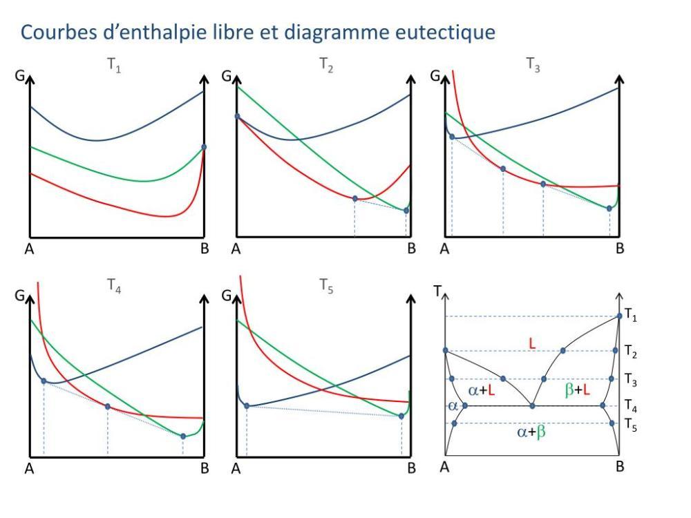 medium resolution of courbes d enthalpie libre et diagramme eutectique