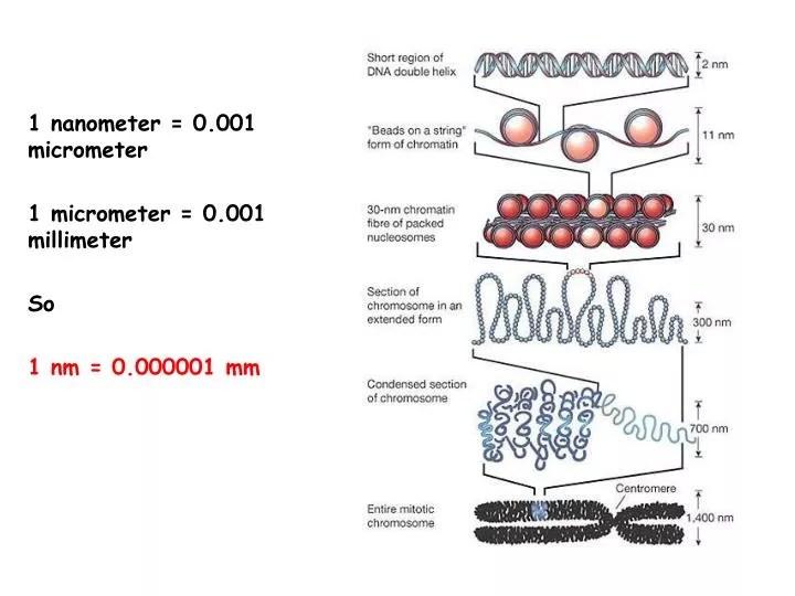 PPT - 1 nanometer = 0.001 micrometer 1 micrometer = 0.001 millimeter So 1 nm = 0.000001 mm PowerPoint Presentation - ID:4273507