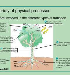 Water Transport In Plants Worksheet   Printable Worksheets and Activities  for Teachers [ 768 x 1024 Pixel ]