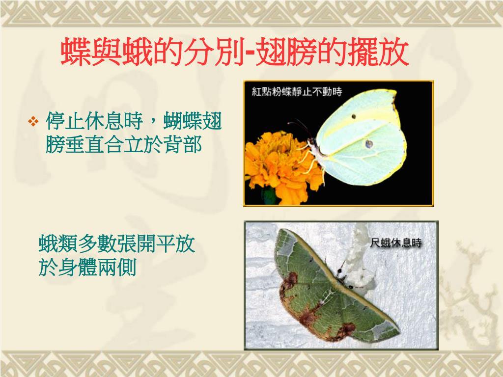 PPT - 認識昆蟲 PowerPoint Presentation, free download - ID:4446356