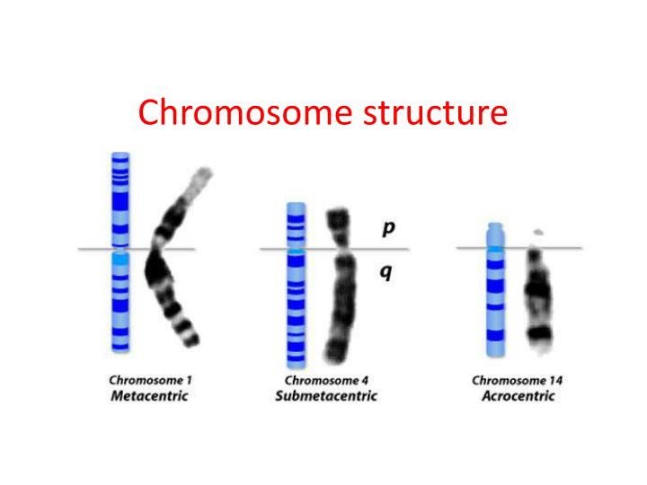 Composition Images Chromosomes Labels