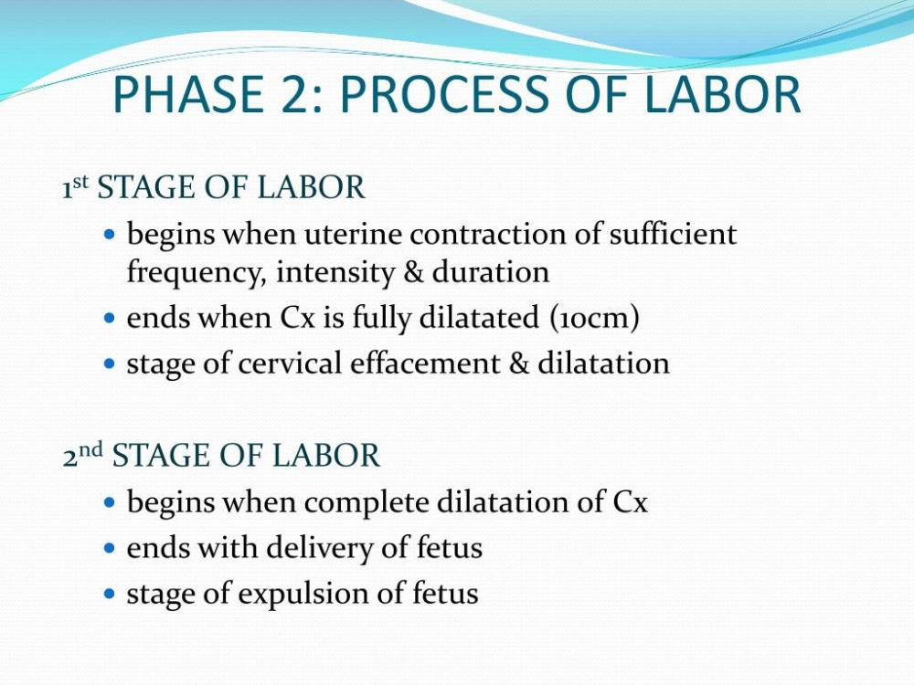 medium resolution of Stages Of Labor Worksheet   Printable Worksheets and Activities for  Teachers