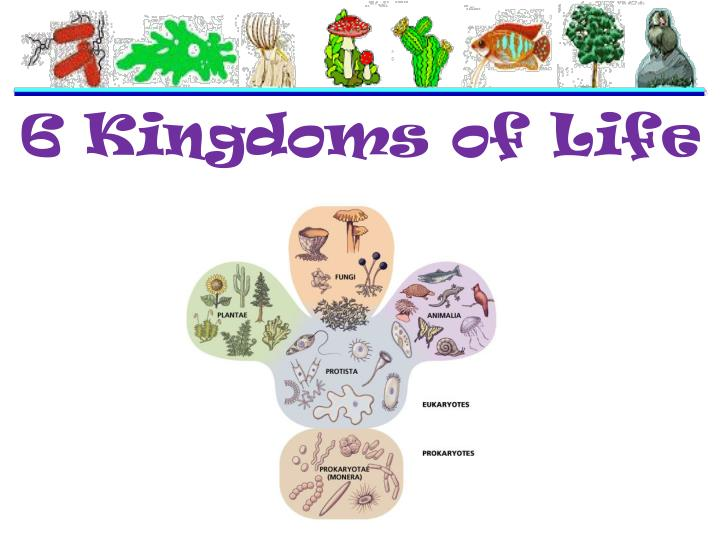 Ppt  6 Kingdoms Of Life Powerpoint Presentation Id4948606