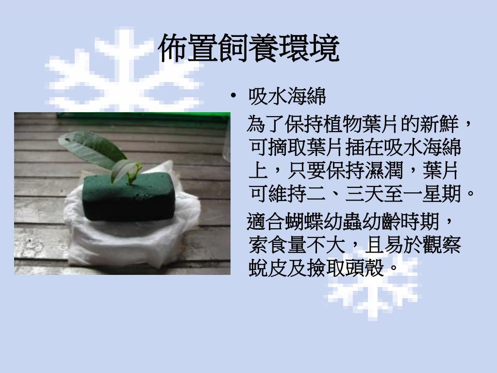 PPT - 飼養計畫 PowerPoint Presentation, free download - ID:5225041