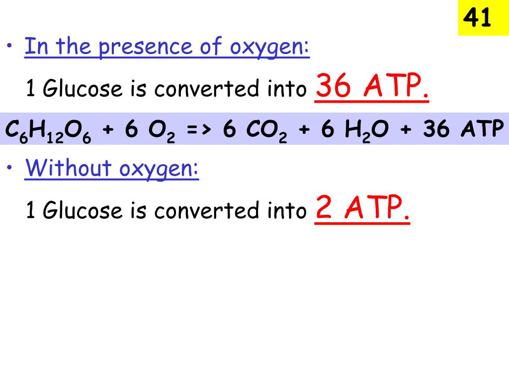 Atp Photosynthesis And Cellular Respiration Webquest