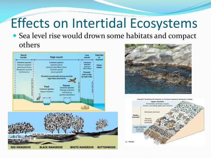 coral reef food chain diagram jl audio cleansweep wiring intertidal ecosystem pictures to pin on pinterest - thepinsta