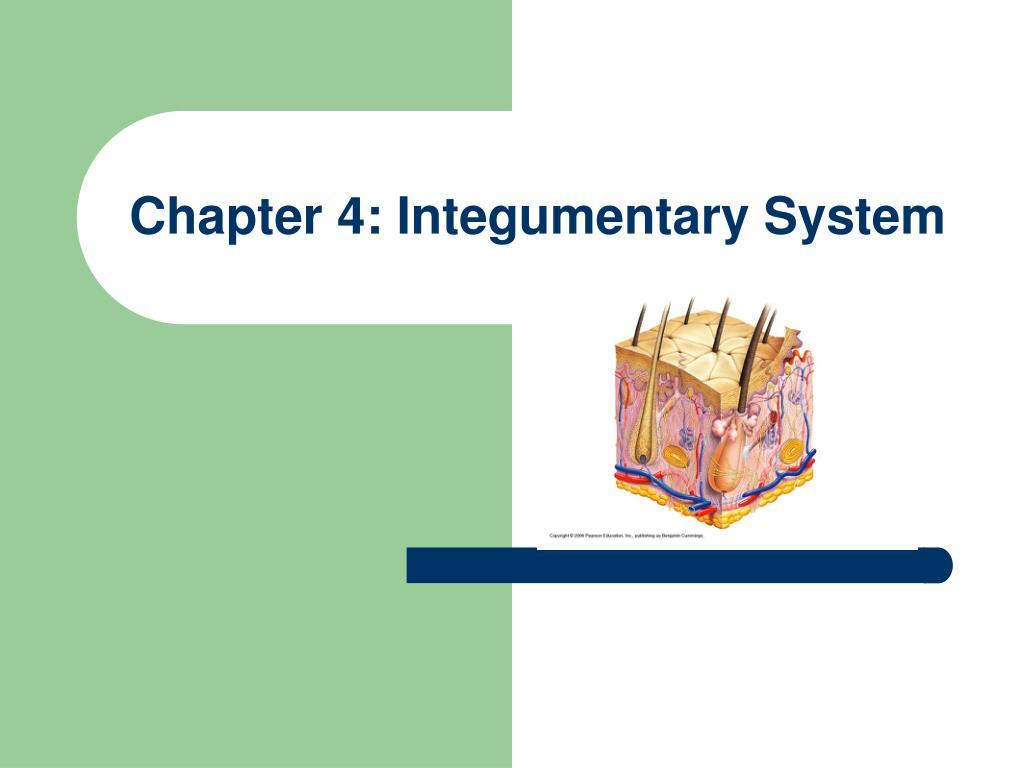 Integumentary System Worksheets