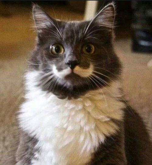 Slike i videozapisi crnih maca