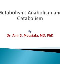metabolism anabolism and catabolism n  [ 1024 x 768 Pixel ]