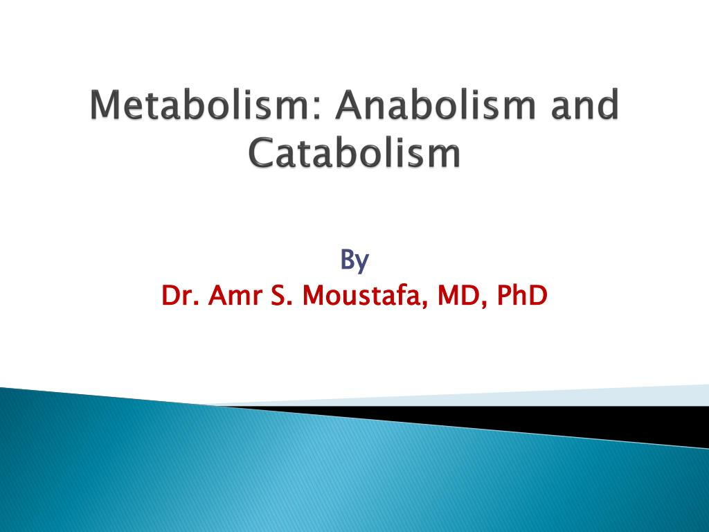 hight resolution of metabolism anabolism and catabolism n