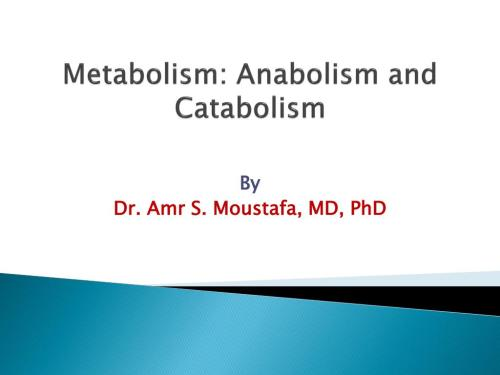 small resolution of metabolism anabolism and catabolism n