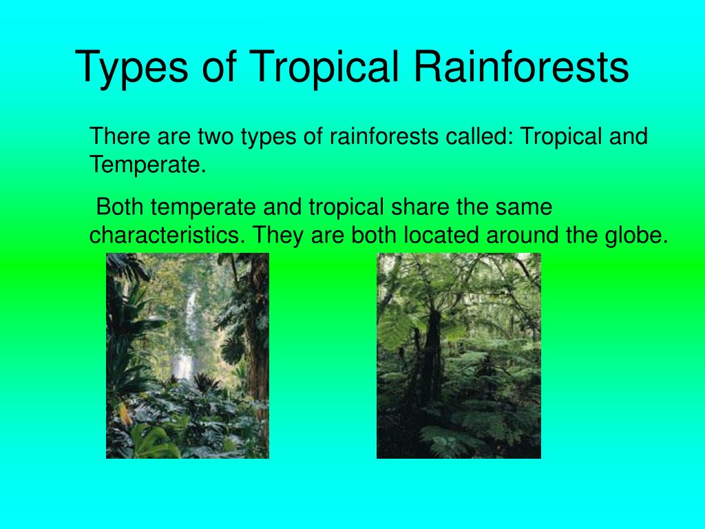 The traditional seasons of spring, summer, fall and winter are absent in rain fore the tropical rain forest has two seasons: Ppt Tropical Rainforest Powerpoint Presentation Free Download Id 5449085