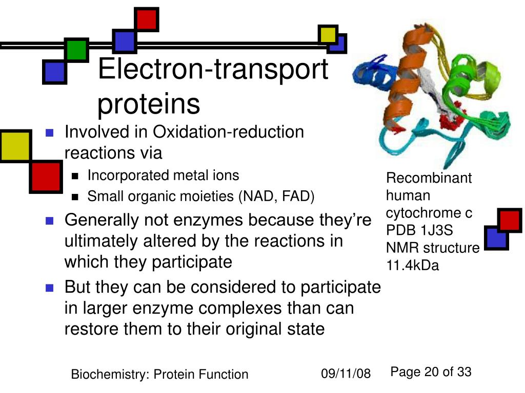 PPT - Protein Function PowerPoint Presentation. free download - ID:5488482