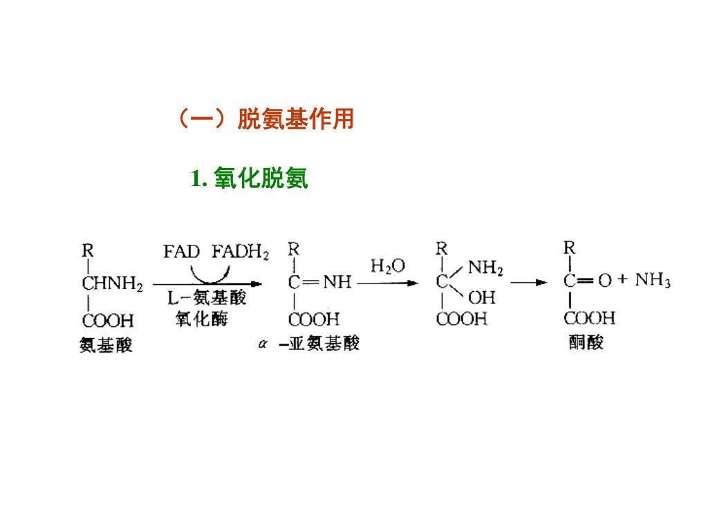 PPT - 氨基酸又怎樣進一步分解 — 脫氨 , 尿素循環 一碳單位 PowerPoint Presentation - ID:5608961