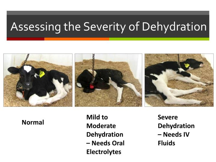 PPT - Health and Disease in Calves and Heifers PowerPoint ...
