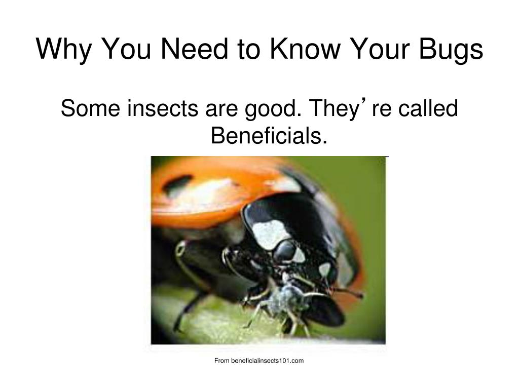 PPT - GOOD BUGS BAD BUGS Organic Pest Management Basics ...