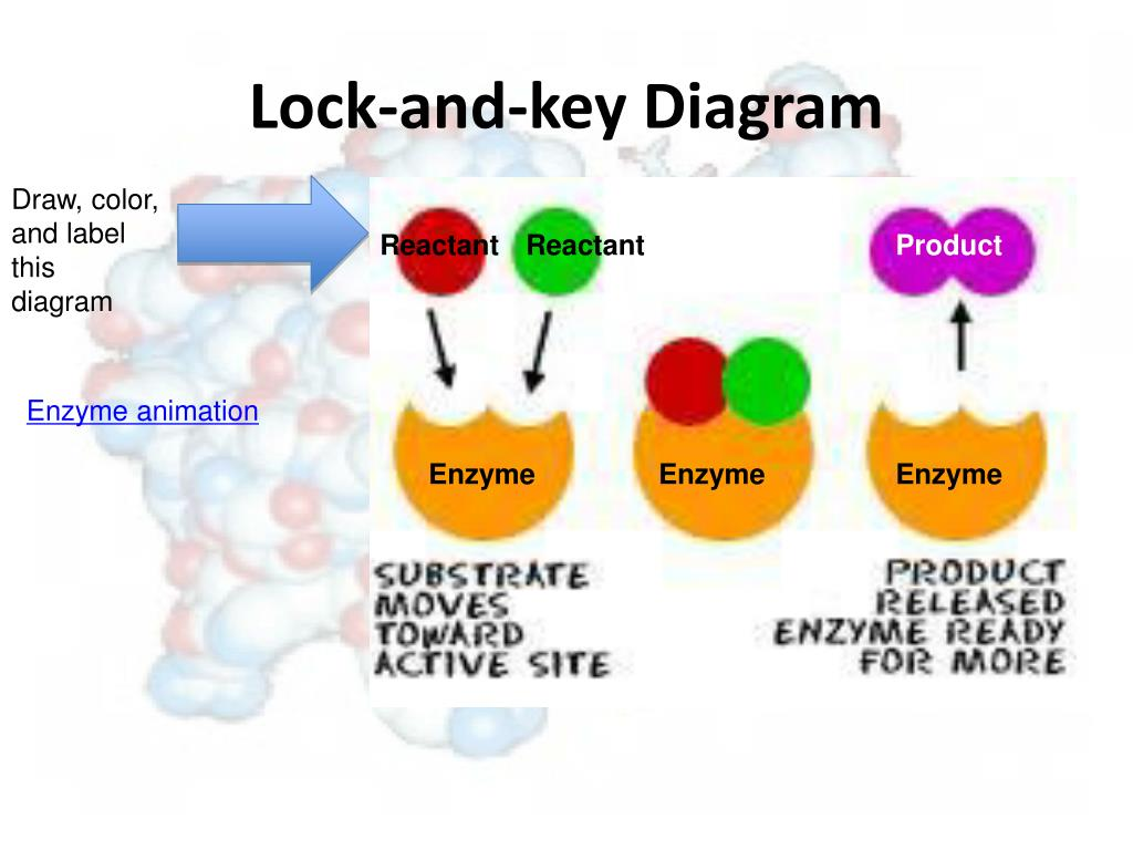 hight resolution of lock and key diagram draw
