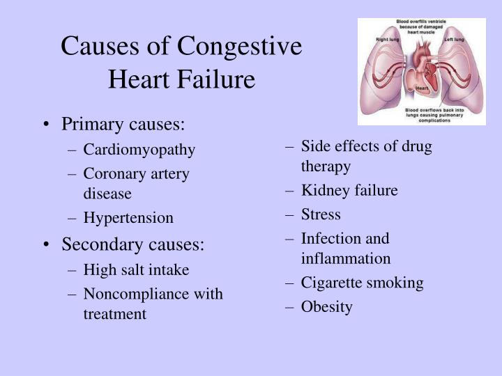PPT - Cardiotonic drugs PowerPoint Presentation - ID:6263816
