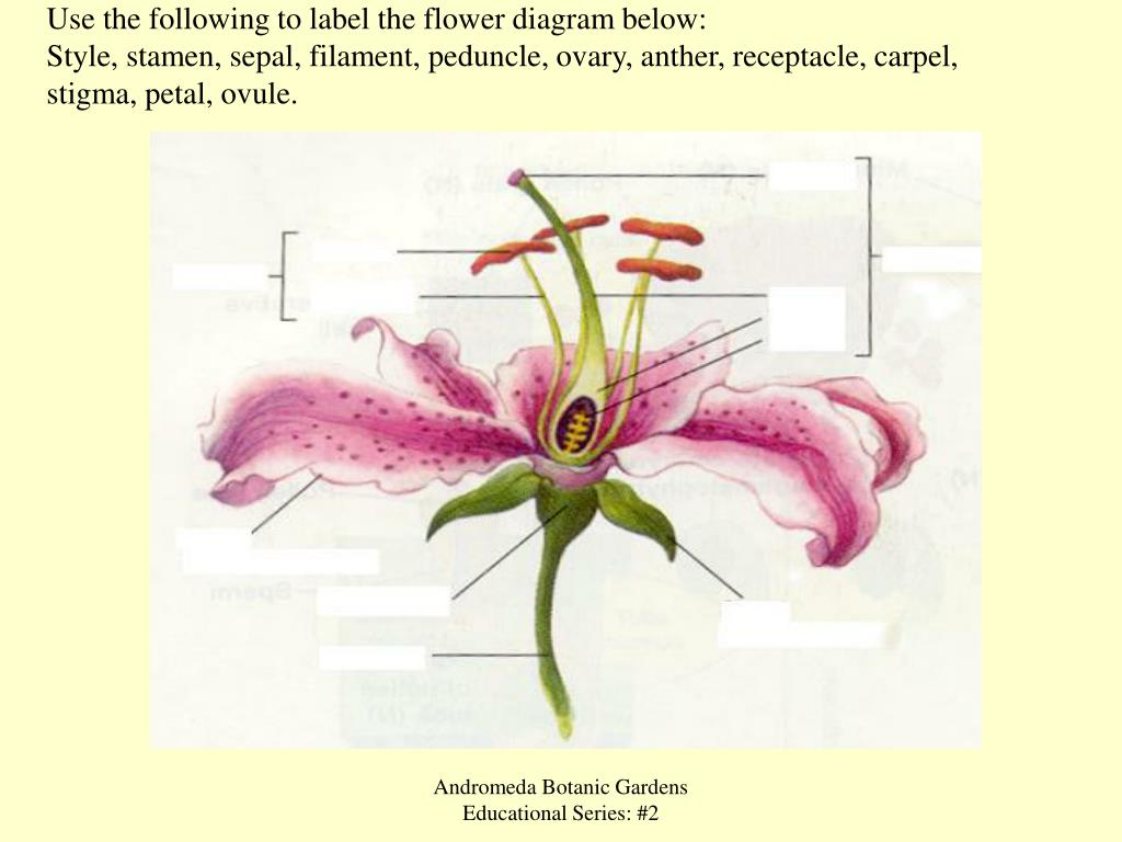 hight resolution of use the following to label the flower diagram below style