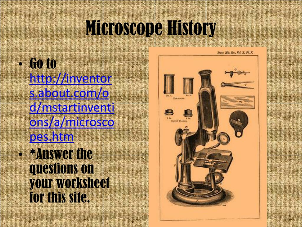 Microscope Use Worksheet Answers