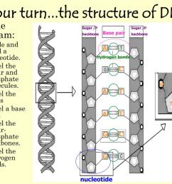 your turn the structure of dna sugar  [ 1024 x 768 Pixel ]