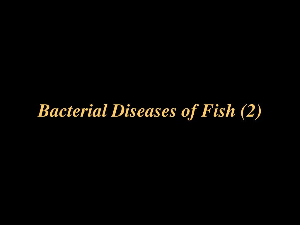 PPT - Bacterial Diseases of Fish (2) PowerPoint Presentation. free download - ID:6907134