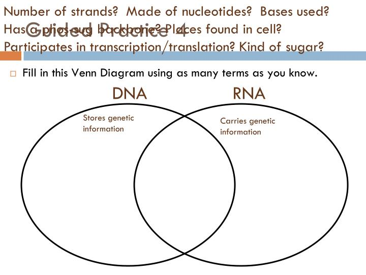 venn diagram comparing dna and rna car equalizer ppt transcription powerpoint presentation id 6981121 number of strands made nucleotides bases used
