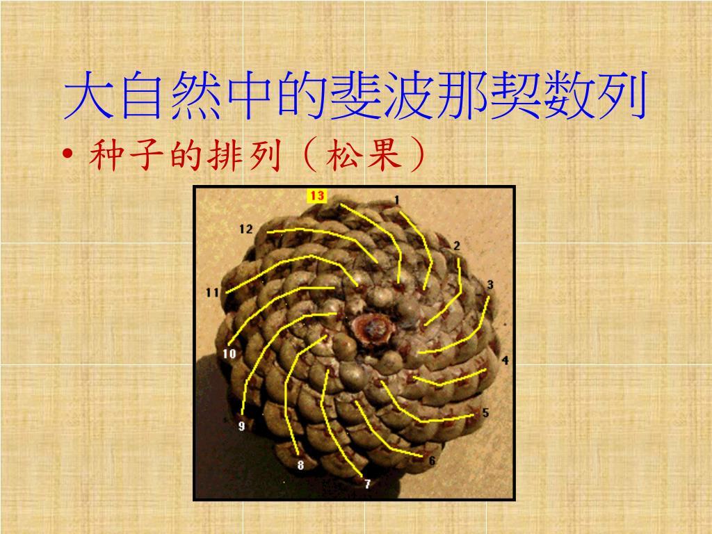PPT - 斐波那契數列 PowerPoint Presentation. free download - ID:7055570