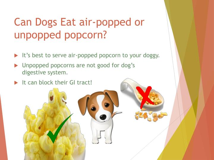PPT - Is Popcorn Safe for dogs? PowerPoint Presentation ...