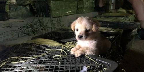 """How China's """"blind box"""" craze led to dead dogs and cats inside crates"""