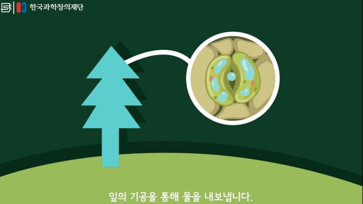 20200808_174124.jpg 초딩도 이해하는 태양광 때문에 잘린 나무가 하는일.jpg
