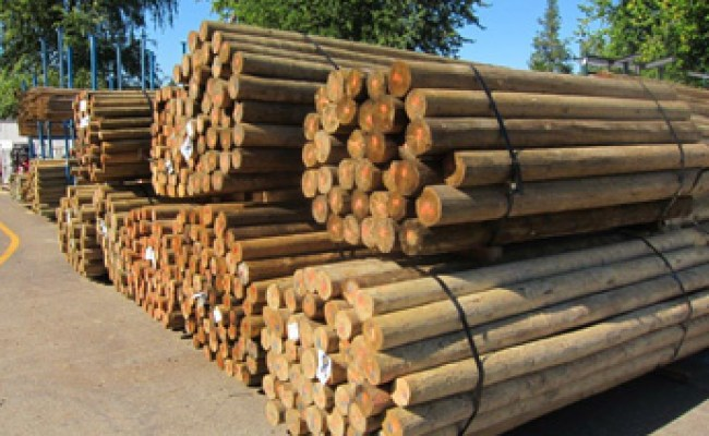 4 Treated Blunt Wood Post 10 Ft Wilco Farm Stores