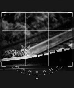 預設的軟體裁圖都是搭配三分割構圖幫助影像主題更明確。(軟體功能示意,本圖尚未案三分割法則裁切完成)