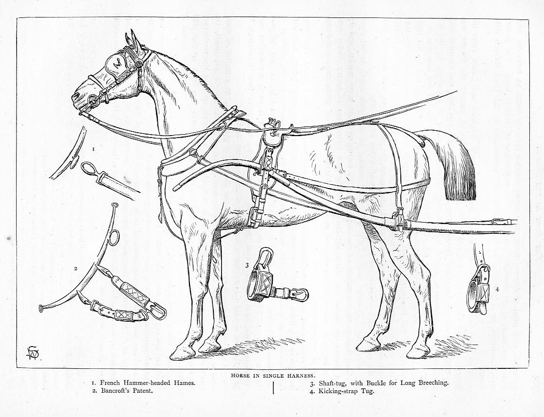 HORSE IN SINGLE HARNESS, BANCROFT PATENT, BUCKLE, STRAP