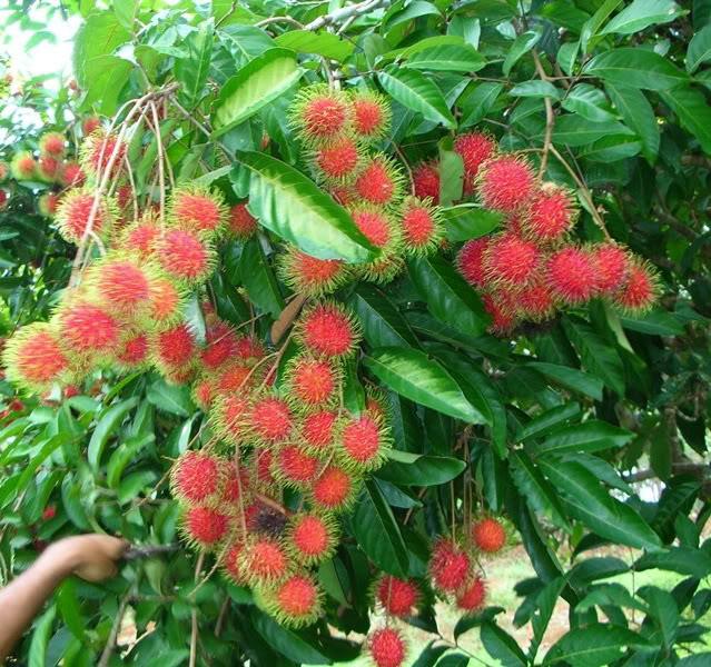 Unusual Fruit Trees Sale