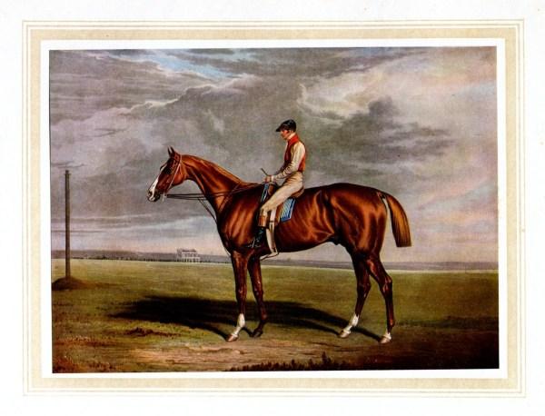 Racehorse Velocipede Antique Color Print Horse Jockey