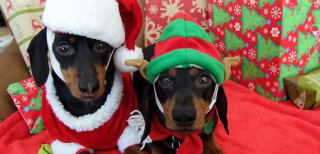 Imagenes de perros en navidad