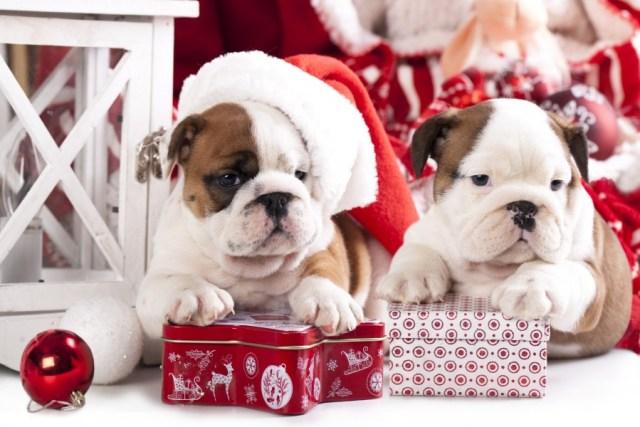 imagenes navideñas de perros