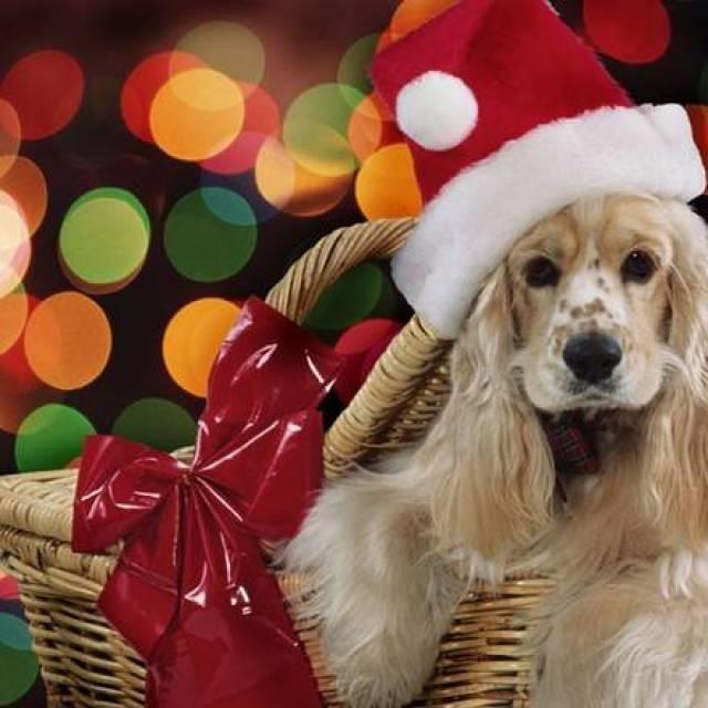 perro con gorro de navidad