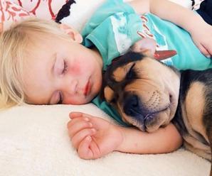 Las 7 Imagenes Mas Lindas y Tiernas de Perros y Niños Durmiendo